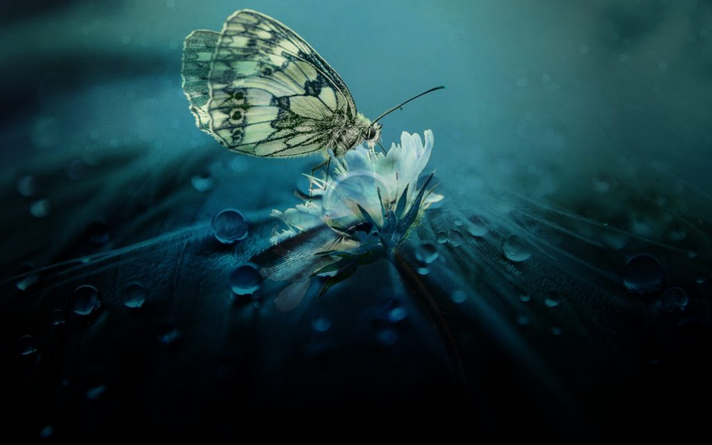 image of beautiful butterfly on flower and dewdrops